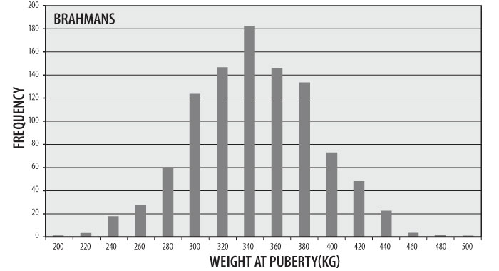 Figure 2:  Distribution of Weight of Puberty for Brahmans