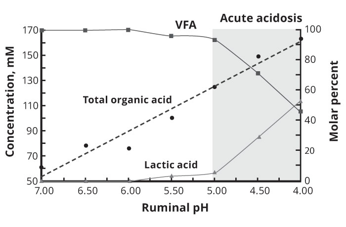 Diagram 1(a): Ruminal pH and acid changes (Acute Acidosis)